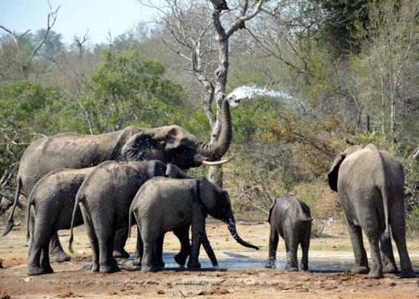 vakantie-Nationaal Park Kruger-Zuid-Afrika