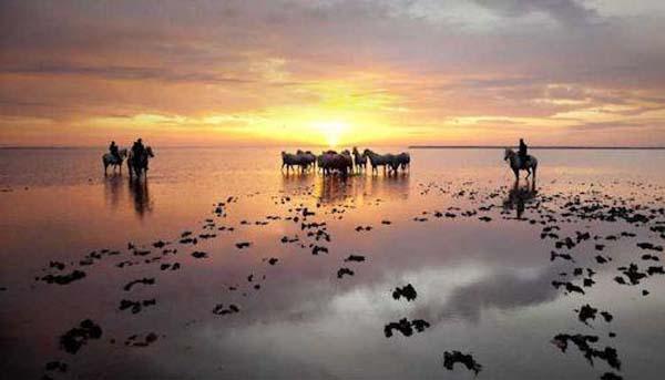 Camargue top 10 vakantie bestemming