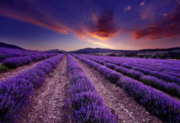 Provenceakantie Frankrijk Provence